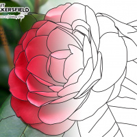 Visit Bakersfield Coloring Book Contest Week Fourteen
